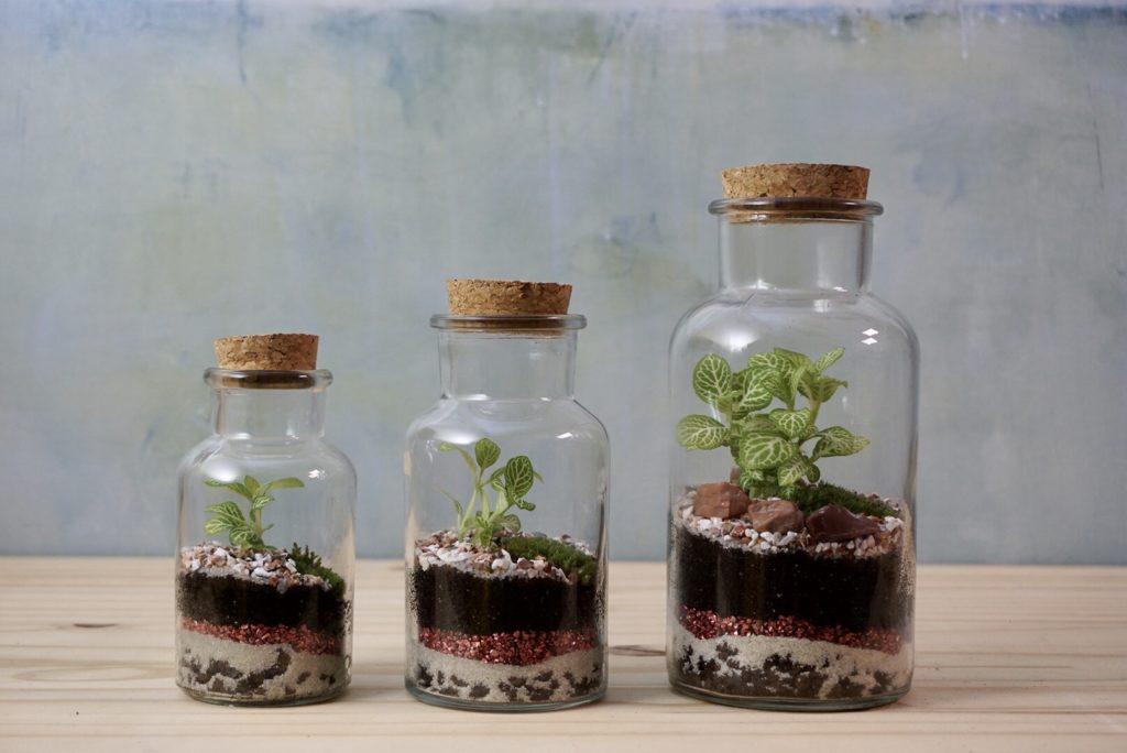 Terrarium MatTim Création dans des petits contenants en verre avec un bouchon en liège